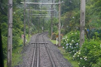箱根旅行線路際のあじさい.jpg
