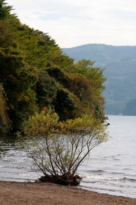 芦ノ湖辺.jpg